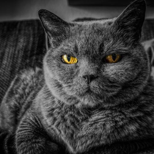 kot chroni przed negatywną energią - wróżka Ksymena-Wielki Mistrz Reiki