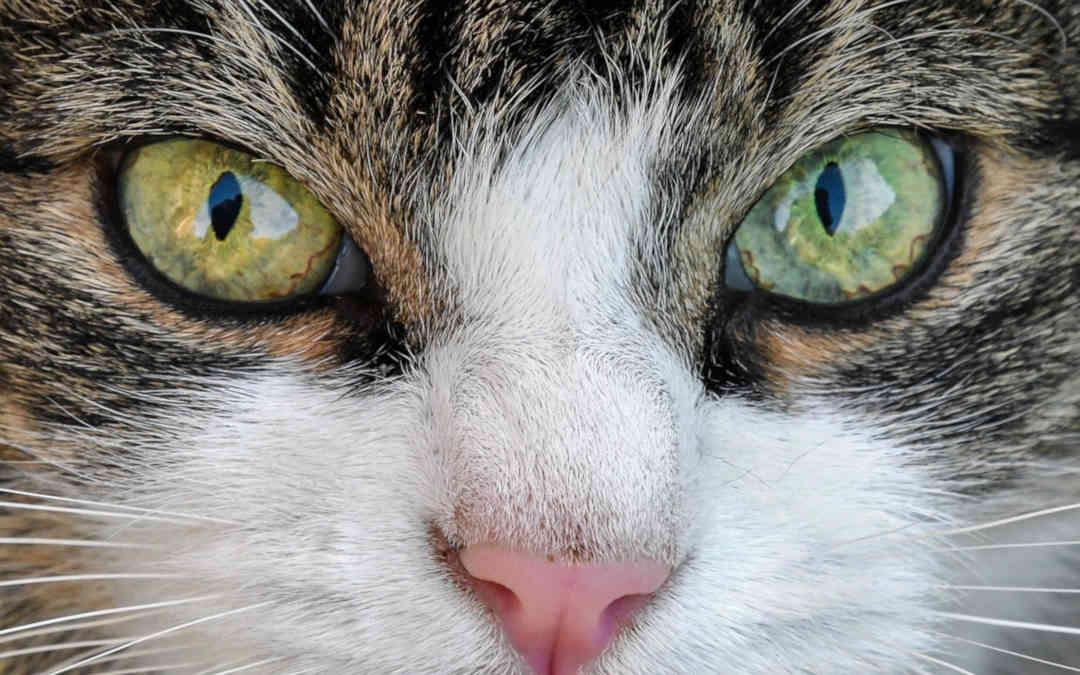Kot oczyszcza z negatywnych energii - wróżka Ksymena